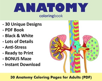 Anatomy coloring | Etsy