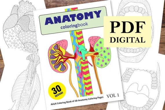 - Anatomy Coloring Book 30 Designs Coloring Books Coloring Etsy