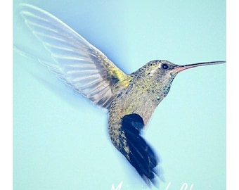 Hummingbird-Hummingbird Digital Art Press Photography