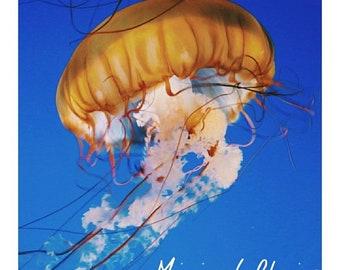 Jellyfish Digital Photography Artistic Press