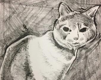 Bas the Cat