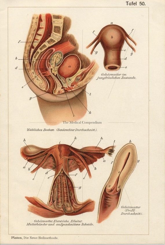 Talk images of the female sex organ was