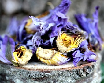 Dried lotus flowers etsy 4 oz blue lotus dried whole flower nymphaea caerulea herb mightylinksfo