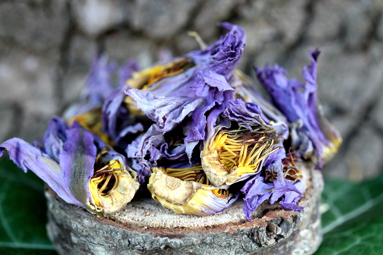 7g blue lotus dried whole flower nymphaea caerulea herb etsy zoom izmirmasajfo