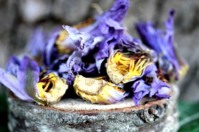 14g blue lotus dried whole flower nymphaea caerulea herb etsy zoom izmirmasajfo