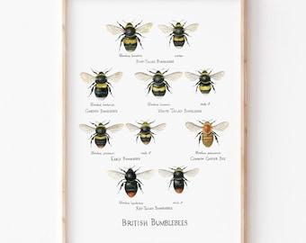A4 British Bumblebees Giclée Print