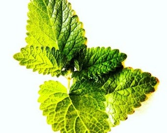 Peppermint Infused Oil- 1 fl oz