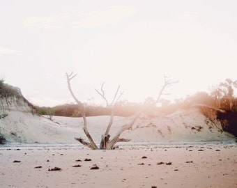 Driftwood Under the Glow of Sunset