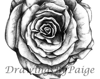 Rose Decor Hand Drawn Pencil Art Print
