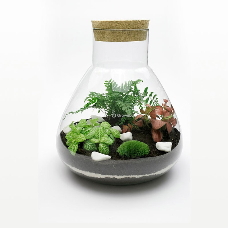 31cm Mini Fern With Fittonia Terrarium Kit With Glass Jar Etsy