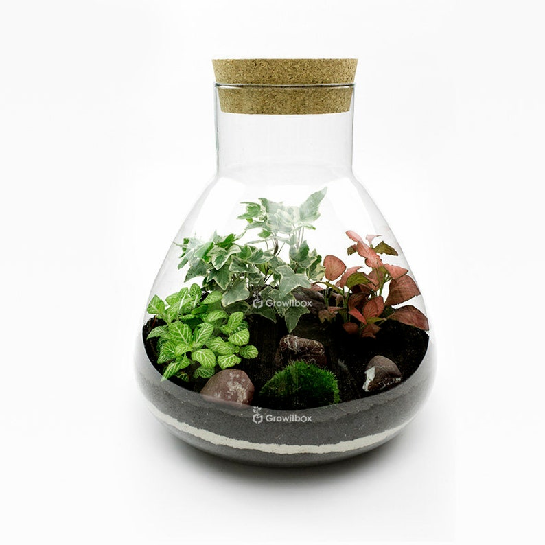 31cm White Ivy With Fittonia Terrarium Kit With Glass Jar Forest In The Jar Diy Ecosystem Terrarium Mossarium Glass Terrarium Kit