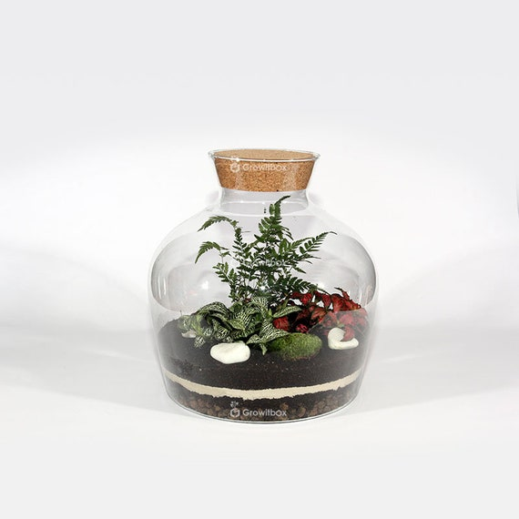 30cm Mini Fern1 With Fittonia Terrarium Kit With Glass Jar Forest In The Jar Diy Ecosystem Terrarium Mossarium Glass Terrarium Kit
