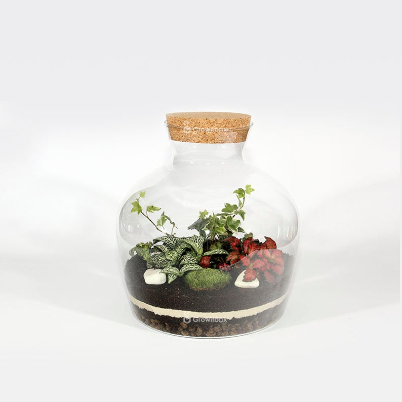 30cm White Ivy With Fittonia Terrarium Kit With Glass Jar Forest In The Jar Diy Ecosystem Terrarium Mossarium Glass Terrarium Kit