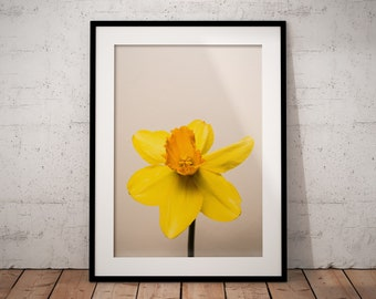 Daffodil | Botanical | Flower | Photo Print