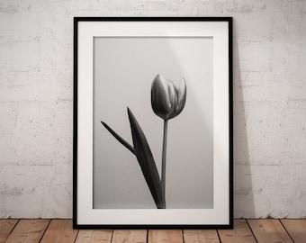 Tulip | Monochrome | Botanical | Flower | Photo Print