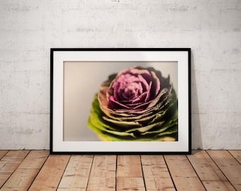Brassica   Botanical   Flower   Photo Print