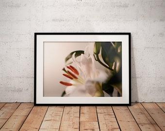Oh Lily II   Botanical   Flower   Photo Print