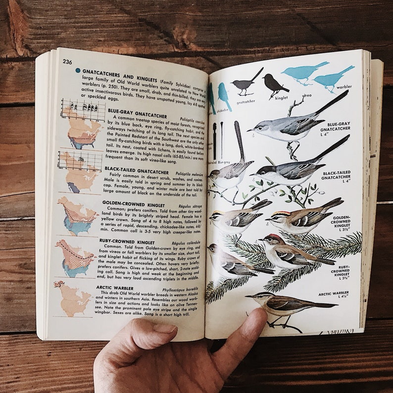 Set of Vintage Field Guides // Bird of North American and Minerals of the  World // Bird and Mineral Identification Vintage Nature Books