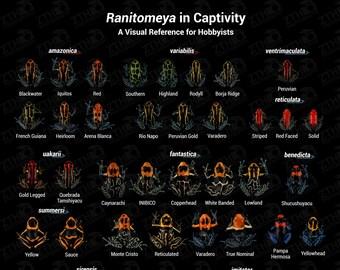 Ranitomeya in Captivity V2