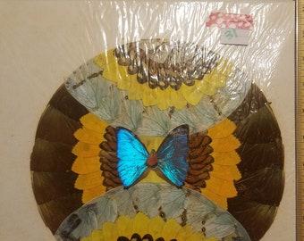 Blue Morpho Butterfly Art