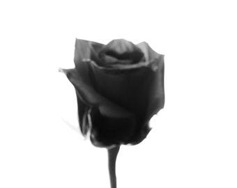The Dark Rose-Contemporary Fine Art photographic print