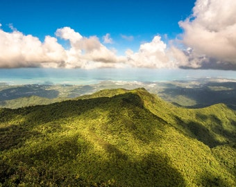 Tropical Rainforest and Puffy Clouds