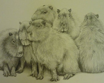 Original Framed Drawing of Capybara