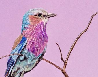Original Artwork - Lilac breasted roller