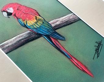 Original Artwork - Ara with Soft Pastels