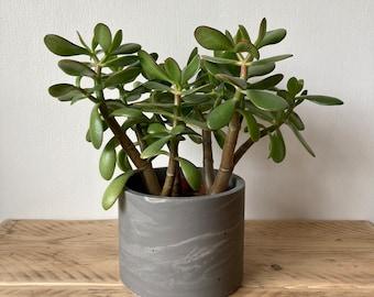 Dark grey marbled large plant pot