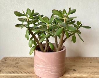Pink marbled large plant pot