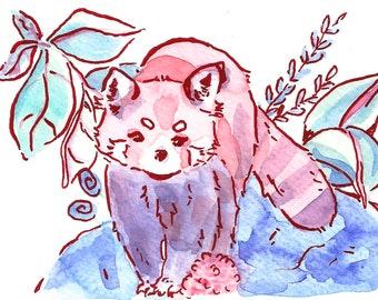 Red Panda IV Art Print