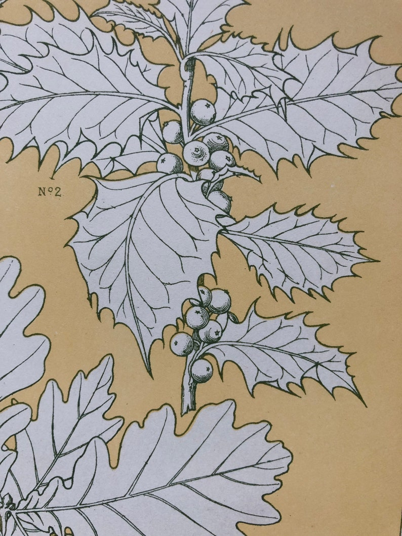 Size: 33 x 23 cms. An Original Plate From The Grammar of Ornament by Owen Jones Leaves From Nature No 5 1809-68