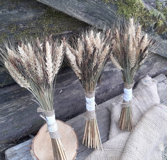 Dried Flowers  Wheat Natural Rustic Grass Bunch