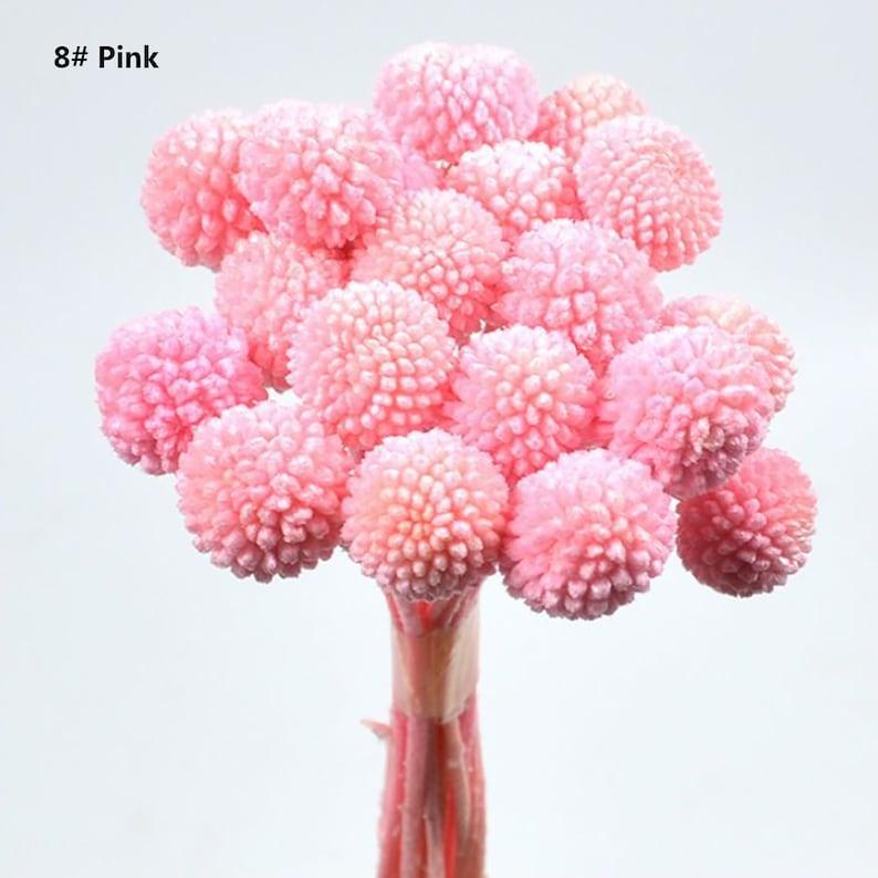 Billy Buttons Globe Flowers Dried Flowers 20 Stems Home Decor Dried Craspedia Dried Billy Balls
