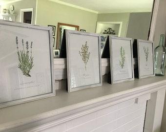 Framed Botanical Prints - Set of 4