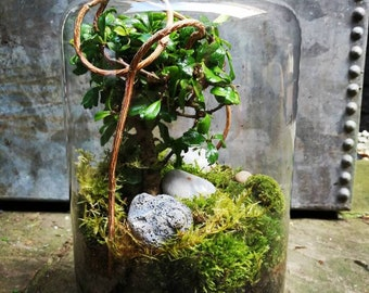 Bonsai in Apothecary bottle
