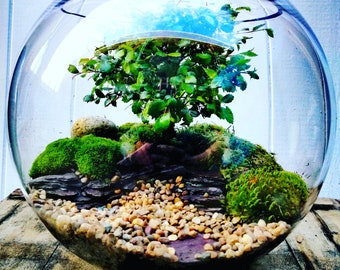 Bonsai terrarium