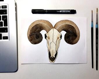 Watercolour Rams Head Skull - Original Painting
