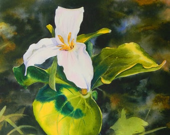 Montana wildflower, Trillium, watercolor
