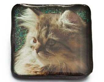 Katze Brosche 34mm Kater Haustier Tier Katzenbrosche Nadel Ansteckbrosche  Buttons Anstecker Anstecknadel Pin Kinderschmuck Kinderbrosche