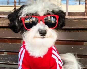 Dog Sunglasses (Small)