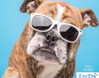 Dog Sunglasses (Large)