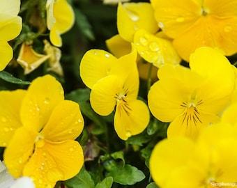 Yellow Flower Photo | Size 5x7