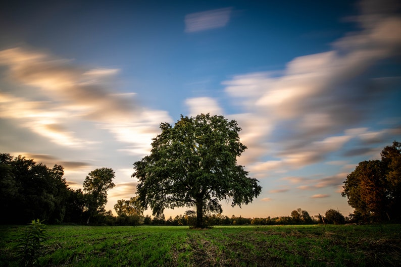 Hilden landscape with tree photo print on canvas image 0