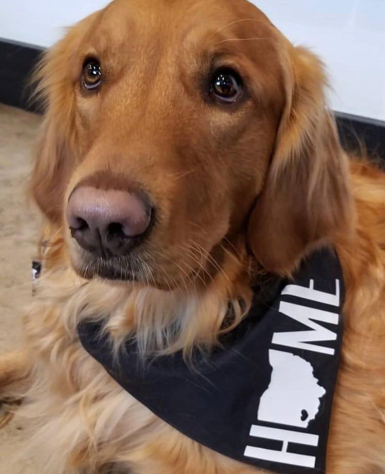 Cincinnati Custom Dog Bandana