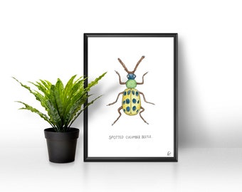 Insect / bug watercolor print - botanical - nature - watercolour - insects - wall art - poster