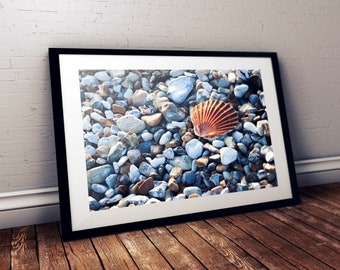 Wall Art Print | Sea Shell | Gloss Print, Fine Art Print or Canvass Wrap | Various sizes