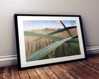 Wall Art Print | 'Dew Drops' | Gloss Print, Fine Art Print or Canvass Wrap | Various sizes