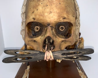 Papua New Guinea Asmat Ancestor Skull replica with shells, nasal decoration - includes display stand